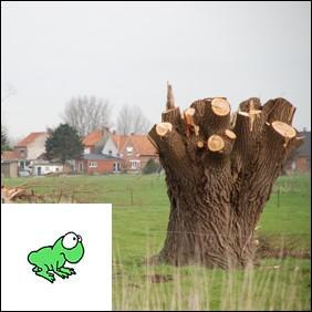 Un arbre écimé pour favoriser la repousse est appelé :