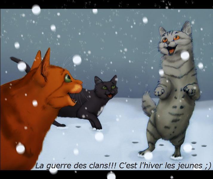 Quel est l'unique tome dans lequel on peut voir cette scène et qui peuvent bien être ces trois chats ?