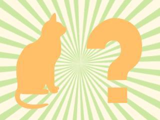 «La Guerre des clans», chats des images 2/2