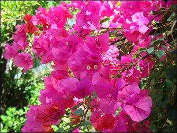 quizz la nature est rose : les fleurs - quiz fleurs, nature