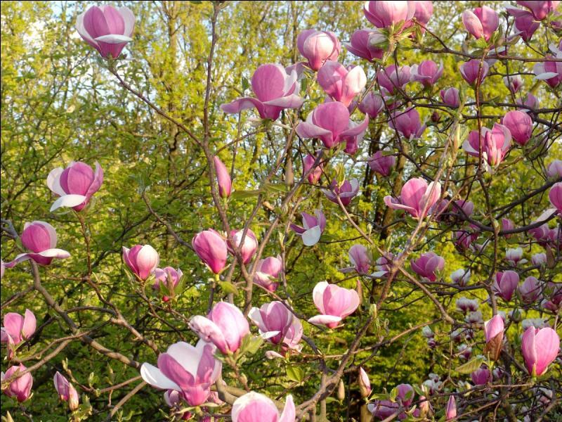 Fabuleux Quizz La nature est ROSE : les fleurs - Quiz Fleurs, Nature XA65