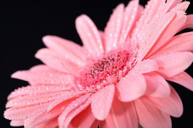 La nature est... ROSE : les fleurs