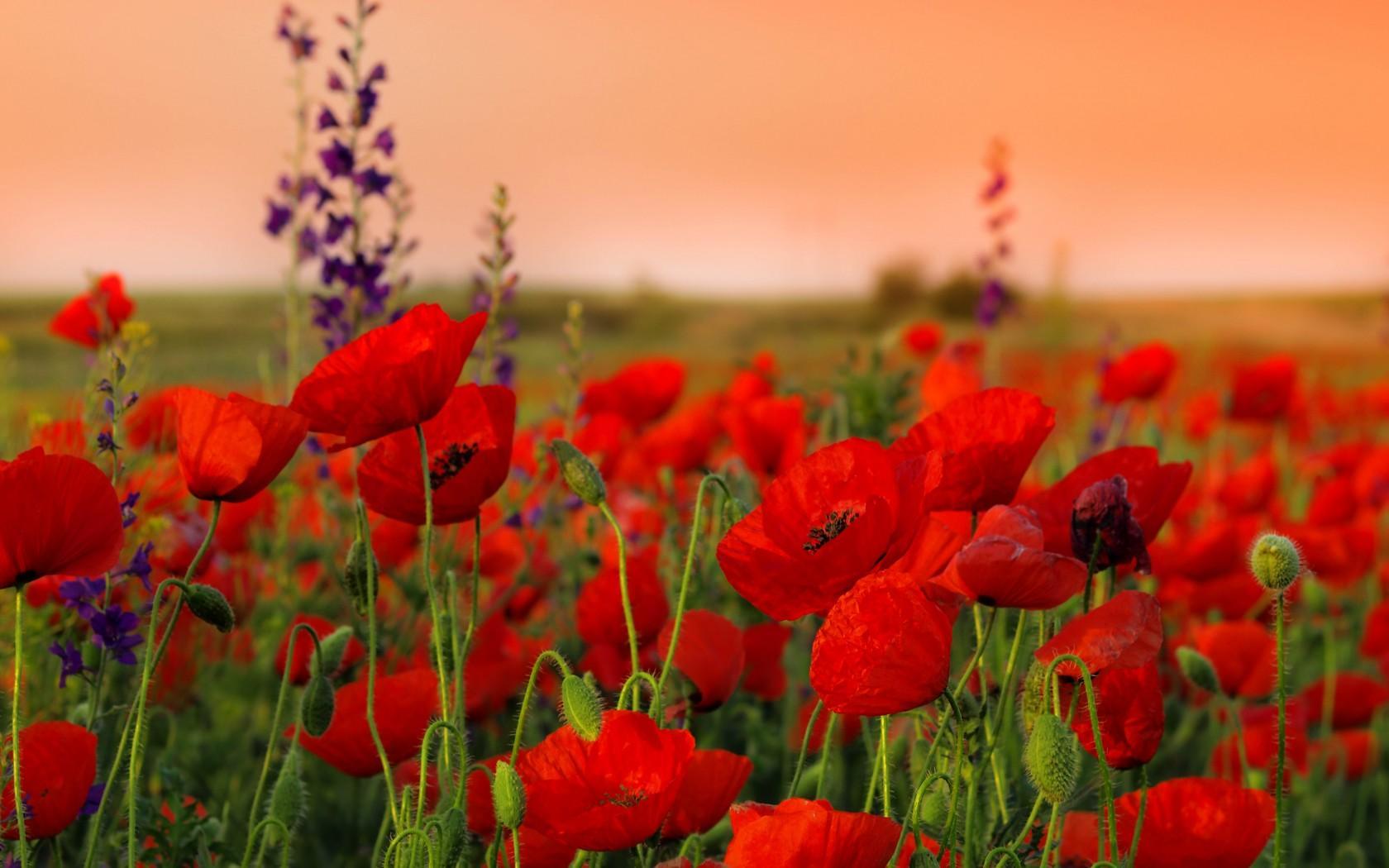 Des fleurs rouges