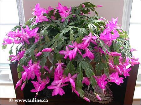 Quizz les noms populaires des plantes d 39 int rieur quiz for Plante d interieur retombante