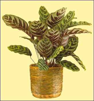 Quizz les noms populaires des plantes d 39 int rieur quiz - Plantes d interieur faciles d entretien ...