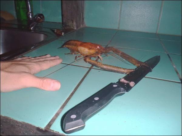 Pour pêcher cette grosse crevette d'eau douce guyanaise, l'idéal est d'avoir une nasse, elle s'appelle ...