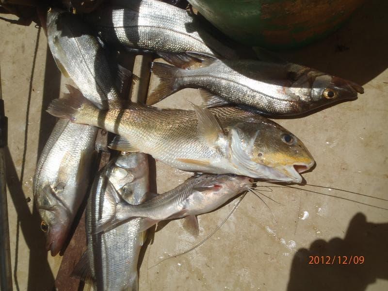 Pêchez les poissons