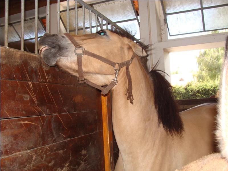 Quelle est l'humeur de ce cheval ?