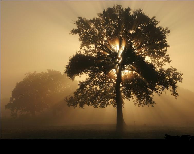 Le tronc d'un arbre ne grossit plus à partir d'un certain d'âge.