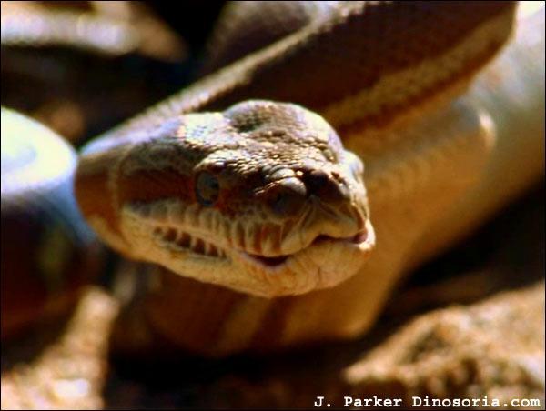 Il existe un python dont le nom a un air de famille avec l'auteur de ce quiz !