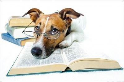Les années de chien  est le troisième volume d'une série dont le premier s'intitulait  Le Tambour.  Quel écrivain allemand en est l'auteur ?