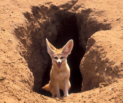 Quelques animaux du désert