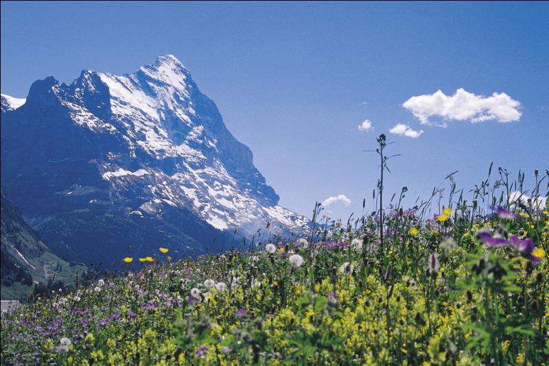 Dans quel pays se trouve l'Oberland bernois, région aux paysages pittoresques entourés de sommets dentelés et riche de plus de 800 lacs ?