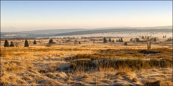 Dans quel pays se trouve le plateau des Hautes Fagnes, vaste espace dégagé où voisinent landes, marais et tourbières, à la lisière d'une forêt d'épicéas géants ?