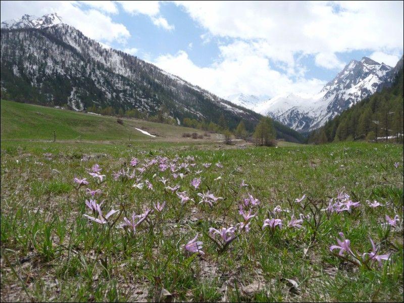 Quel parc naturel régional français, créé en 1977, est situé dans le département des Hautes-Alpes ?