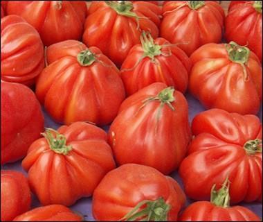 Quel est ce type de tomate ?