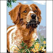 Nous continuons dans la série  races de chiens  : Quel est ce chien ?