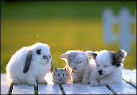 Parmi ces animaux lequel est le plus rusé ?