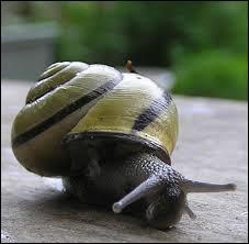 Où peut-on trouver un escargot ?