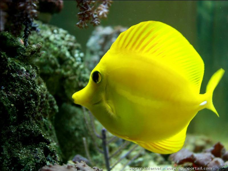 De quelle la couleur est ce poisson ?