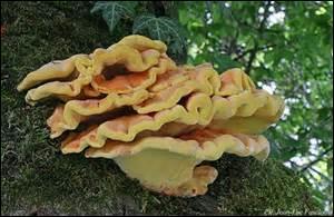 A partir de quel mois peut-on trouver des champignons sauvages ?