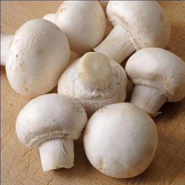 Quizz champignons les grands classiques quiz champignons - Comment cuisiner les trompettes de la mort champignons ...
