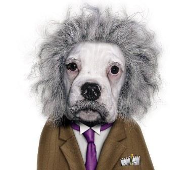 Le cerveau d'Albert Einstein