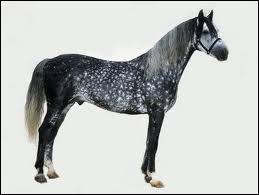 Quelle est la spécialité de l'Orlov (race de chevaux) ?