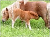quizz les chevaux galop 3 quiz galop equitation cheval. Black Bedroom Furniture Sets. Home Design Ideas