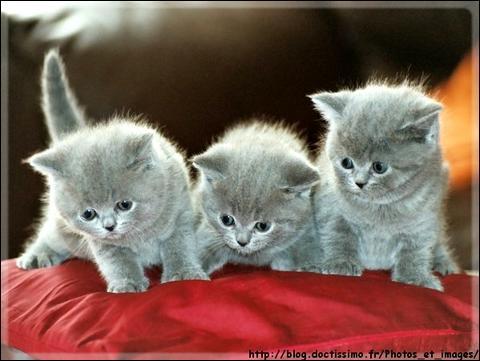 Quel est le bébé de la chatte ?
