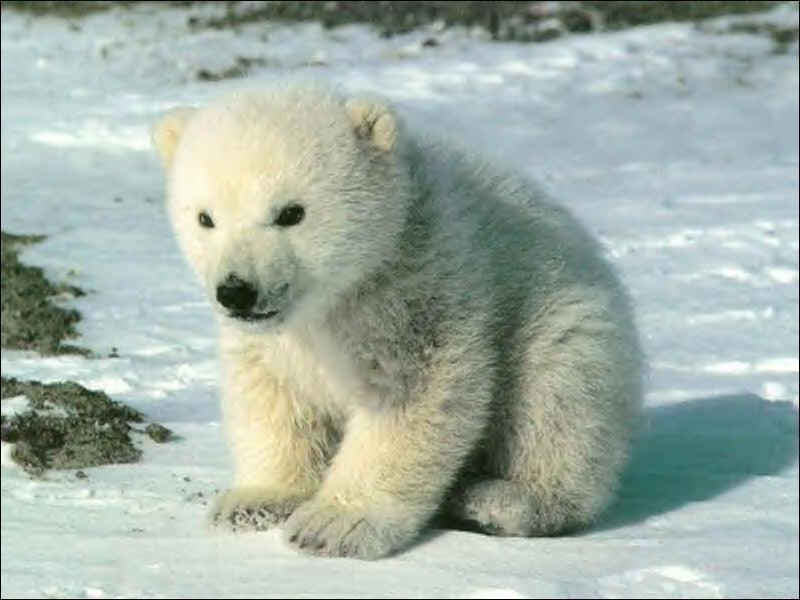 Comment dit-on  ours  en anglais ?