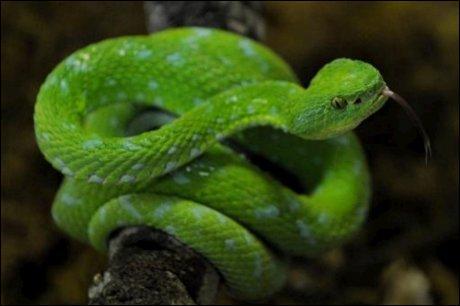 En anglais,  serpent  se dit :