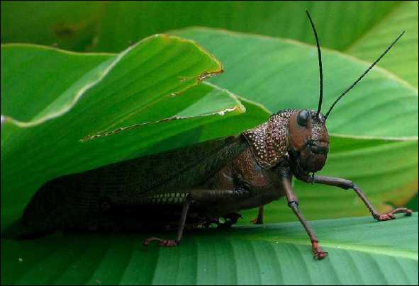 Quel insecte est tu - Comment cuisiner des marrons en boite ...