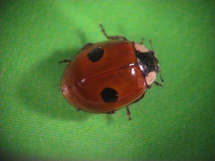 Insectes en photo (1)