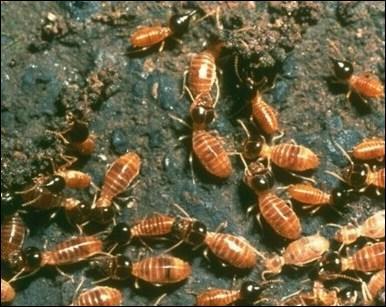 Quels sont ces insectes ?