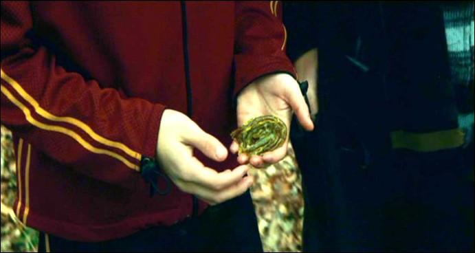 Dans le film, Neville donne la branchiflore à Harry, ce qui le sauve pour la deuxième tâche du tournoi. Dans le livre, qui donne la branchiflore à Harry ?