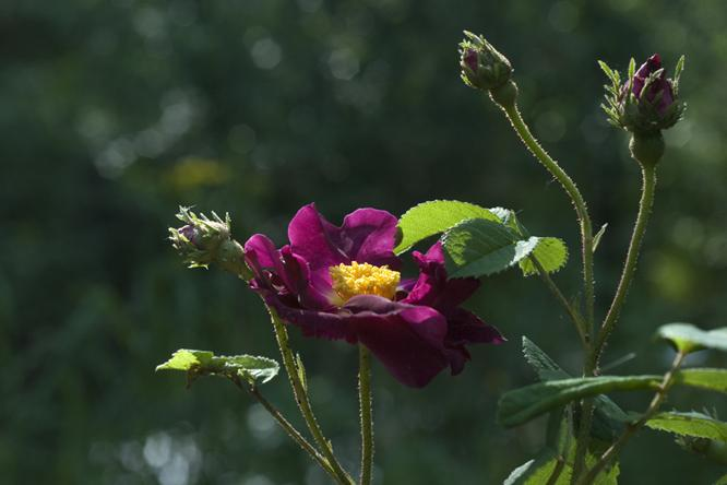 Quizz plantes arbres fleurs quiz fleurs plantes nature for Arbres plantes fleurs
