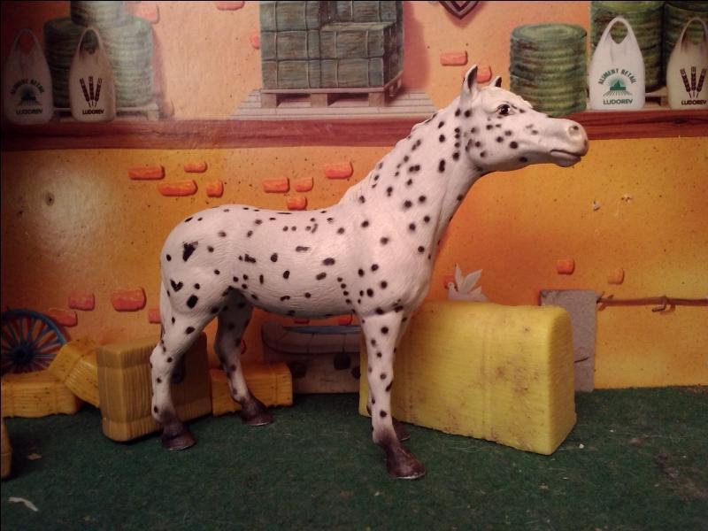 Mais, quel est ce cheval ?