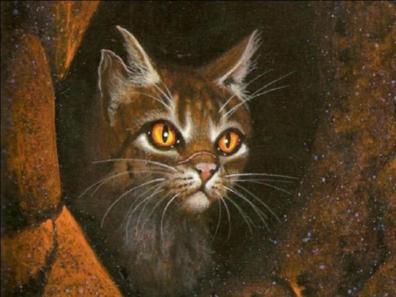 Et voici un chat sanguinaire, père de nombreux petits :