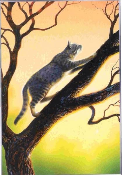 Et pour finir, un chat amoureux, mais qui n'a pas eu la chance d'être en couple avec l'élue de son coeur :