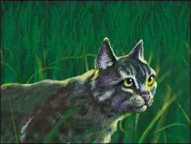 Et voilà un chat qui a eu deux compagnes et cinq petits :
