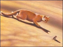 Et voilà la compagne d'un de ces deux premiers chats :