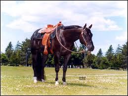 Quelle est la race de ce beau cheval calme ?