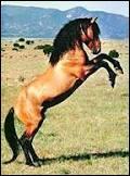 Quelle est la race de ce majestueux cheval ?