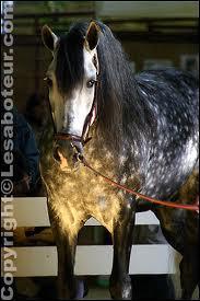 Quelle est la race de ce magnifique cheval ?