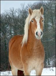Quelle est la race de ce superbe cheval ?