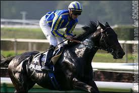 Quelle est la race de ce cheval très rapide ?