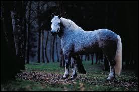 Quelle est la taille de ce gros cheval ?