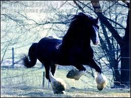 Quelle est la race de cet imposant cheval ?