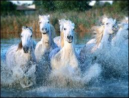 Quelle est la race de ce troupeau ?